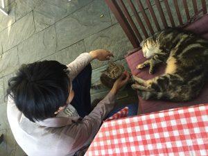 房総半島にもあった!!おすすめの猫カフェ