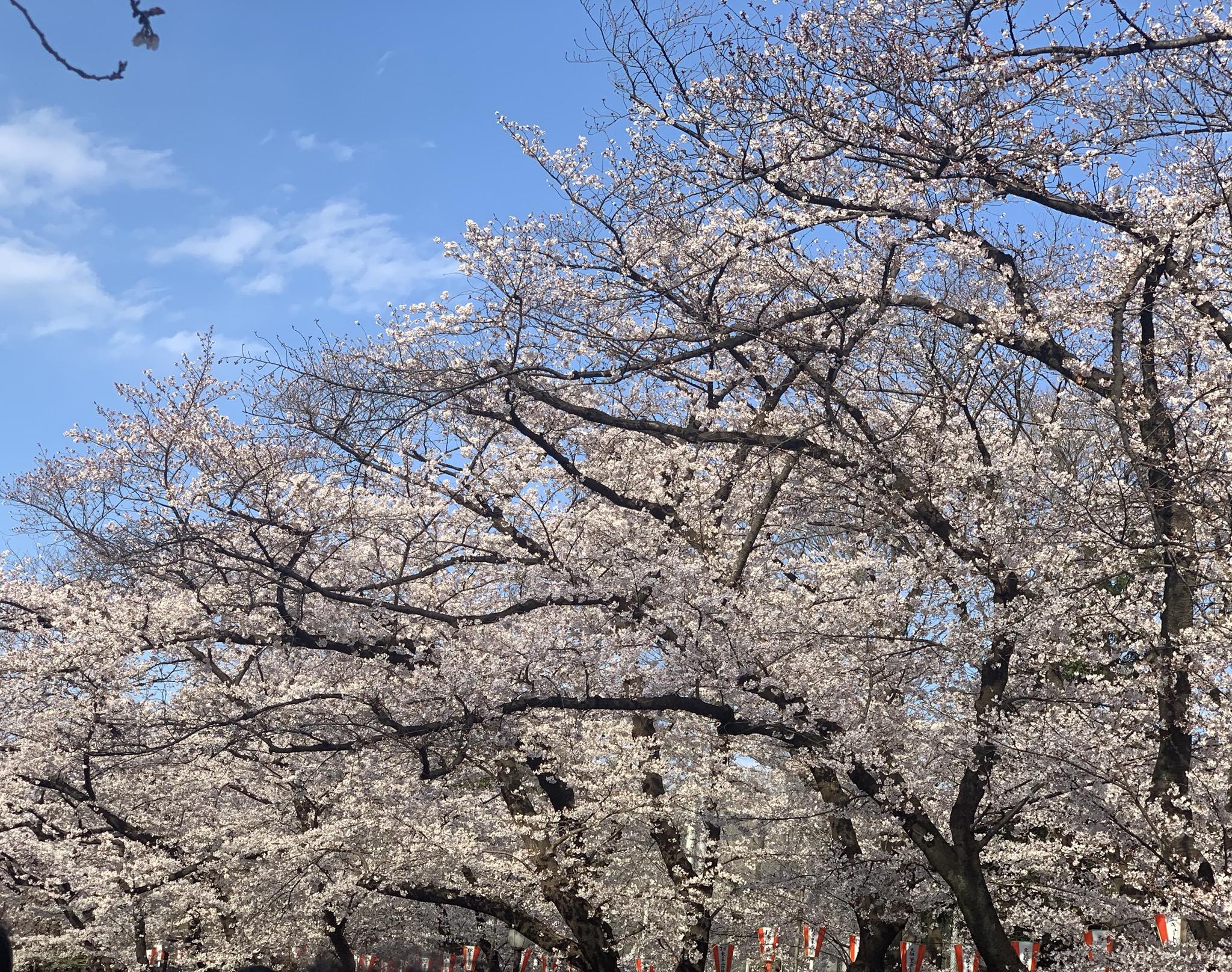 花見でにぎわう上野公園で遠征旅終了
